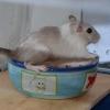 Ро. Моя миска!!