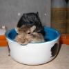Фред и Сева спят в миске