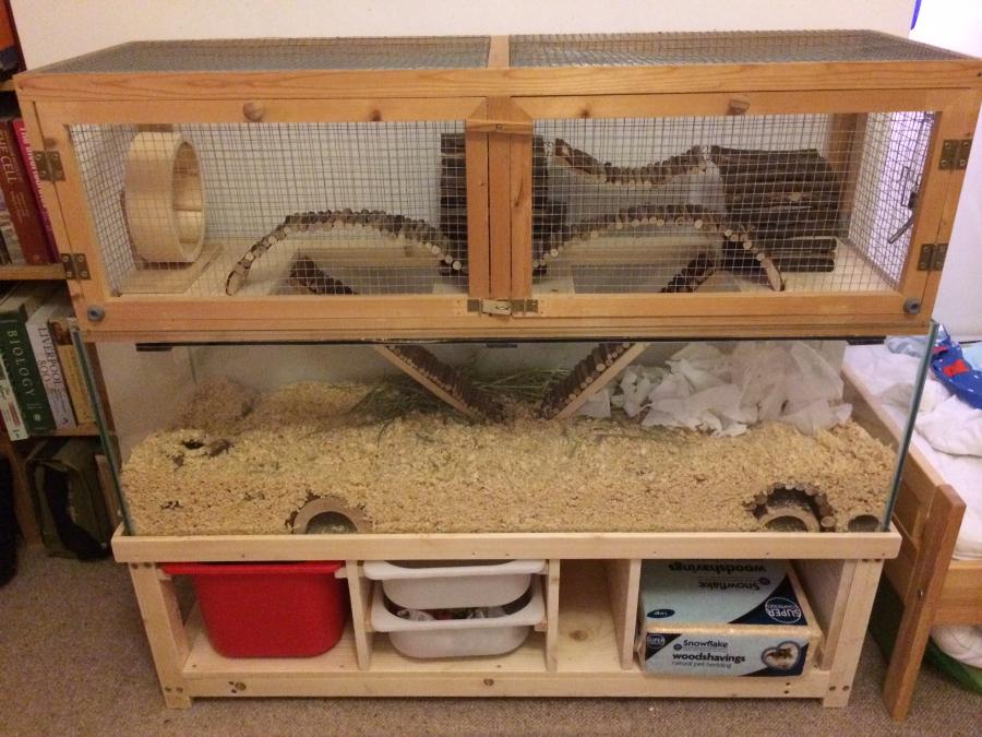 Домики для песчанок