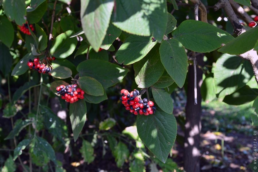 Осенние ягодки